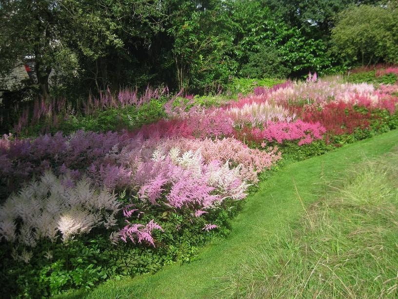 Blütenpracht in Holehird Gardens im Juli 2016. Viele Farben von Astilben.